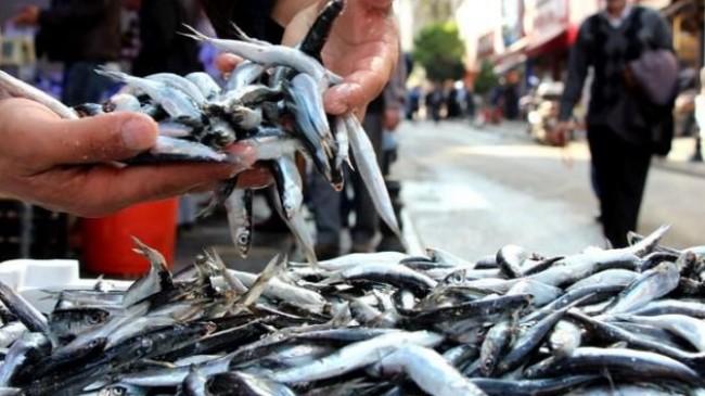 """""""Vatandaş bir süre daha pahalı balık yiyecek"""""""