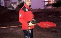 Balıkesir'de horoz kurtarma operasyonu