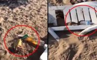 Plajı savaş alanına çevirdiler!  Şezlongları kırıp, çöp poşetlerini yere atanlara belediyeden sert tepki